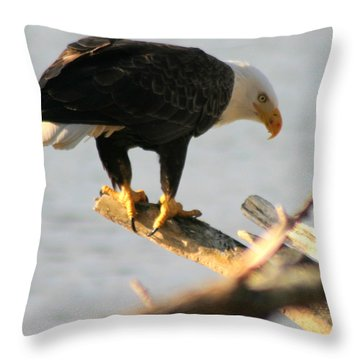 Throw Pillow featuring the photograph Eagle On His Perch by Kym Backland