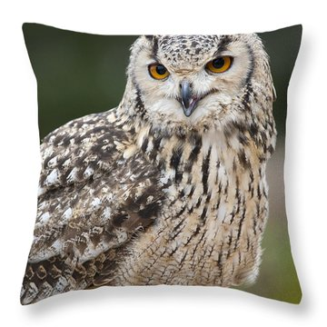 Eagle Owl II Throw Pillow