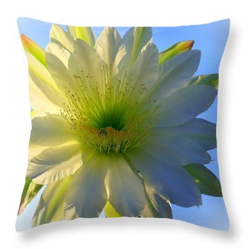 Morning Beauty Throw Pillow by Mistys DesertSerenity