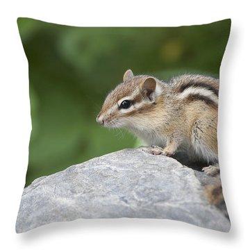 Eastern Chipmunk Tamias Striatus Throw Pillow by Amy Kay