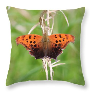 Throw Pillow featuring the photograph Eastern Comma Butterfly by Penny Meyers