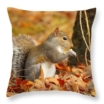Eastern Grey Squirrel Throw Pillow by Andrew McInnes