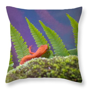 Eastern Newt 1 Throw Pillow by Douglas Barnett