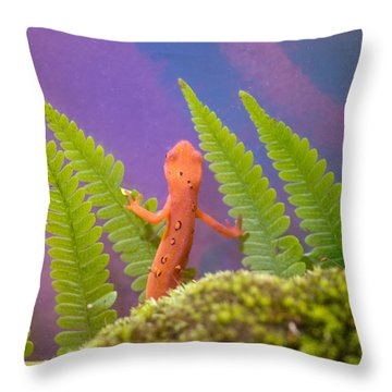 Eastern Newt 2 Throw Pillow by Douglas Barnett