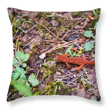 Eastern Newt Juvenile 2 Throw Pillow by Douglas Barnett