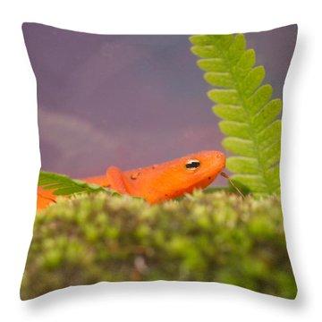 Eastern Newt Notophthalmus Viridescens 3 Throw Pillow by Douglas Barnett