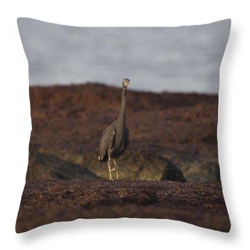 Eastern Reef Egret-dark Morph Throw Pillow by Douglas Barnard
