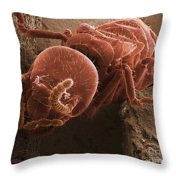 Eastern Subterranean Termite, Sem Throw Pillow by Ted Kinsman