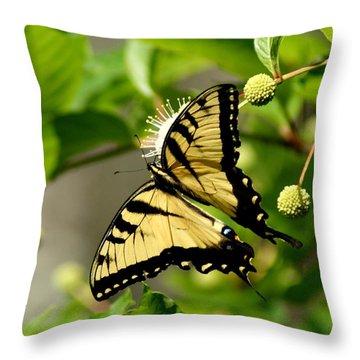 Eastern Tiger Swallowtail IIi Throw Pillow by Bruce W Krucke