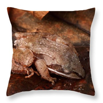 Eastern Wood Frog Hibernating Throw Pillow by Ted Kinsman