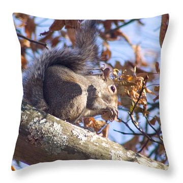 Throw Pillow featuring the photograph Eating Squirrel by Michael Waters