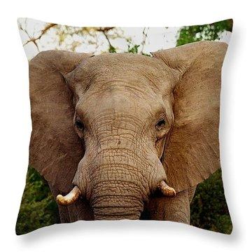 Elephant Portrait Throw Pillow by Bruce W Krucke