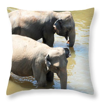Throw Pillow featuring the photograph Elephants In Water by Pravine Chester