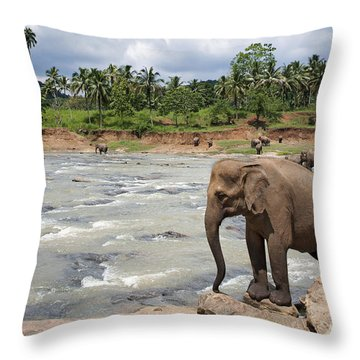 Elephants Throw Pillow by Jane Rix
