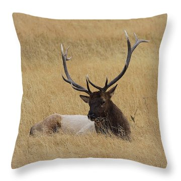 Throw Pillow featuring the photograph Elk In The Meadow by Steve McKinzie