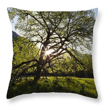 Elm In Cook's Meadow Throw Pillow by Rick Berk