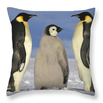 Emperor Penguin Aptenodytes Forsteri Throw Pillow by Tui De Roy