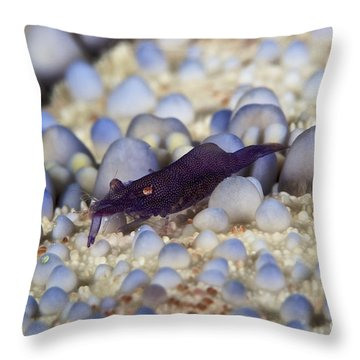 Emporer Shrimp On A Large Pin Cushion Throw Pillow by Terry Moore