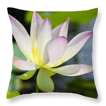 Enchanted Beauty Throw Pillow