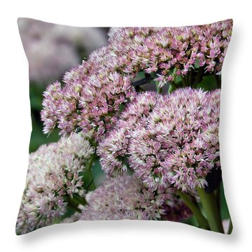 Throw Pillow featuring the photograph End Of Summer Sedum by Janice Drew