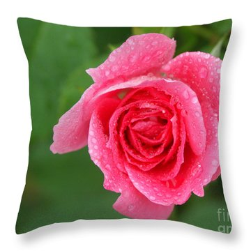 English Rose Throw Pillow by Bonnie Sue Rauch and Photo Researchers