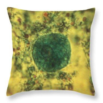Entamoeba Coli Trophoite Lm Throw Pillow by Eric V. Grave