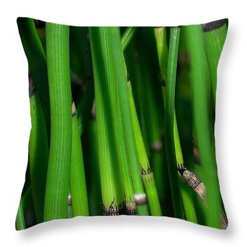 Equisetum Throw Pillow by Judi Bagwell
