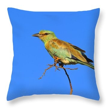 Eurasian Roller Throw Pillow by Tony Beck