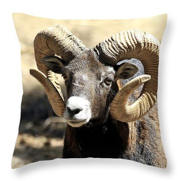 European Big Horn - Mouflon Ram Throw Pillow
