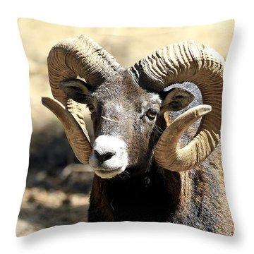 European Big Horn - Mouflon Ram Throw Pillow
