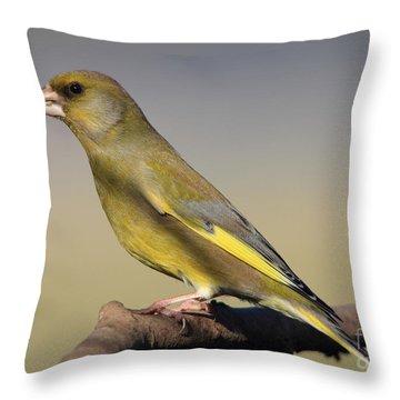 European Greenfinch Throw Pillow