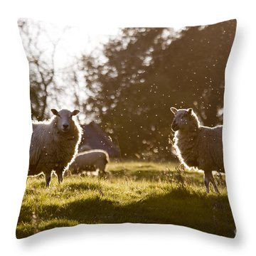 Evening On The Meadow Throw Pillow by Angel  Tarantella