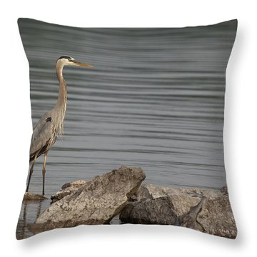 Ever Alert Throw Pillow by Eunice Gibb