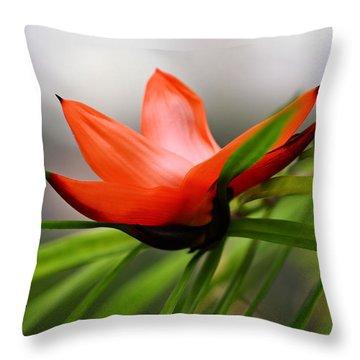 Exotic Throw Pillow by Katherine White