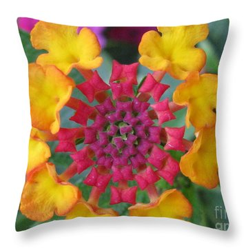 Extraordinary Photography Throw Pillow by Tina Marie