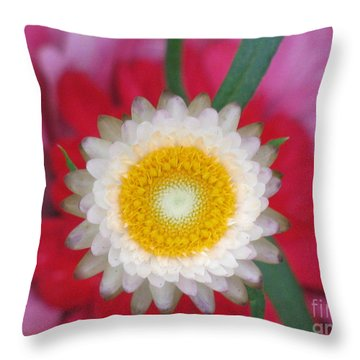Throw Pillow featuring the photograph Eye Candy Photography by Tina Marie