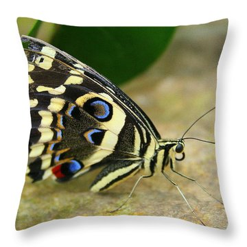 Throw Pillow featuring the photograph Eye To Eye With A Butterfly by Laurel Talabere