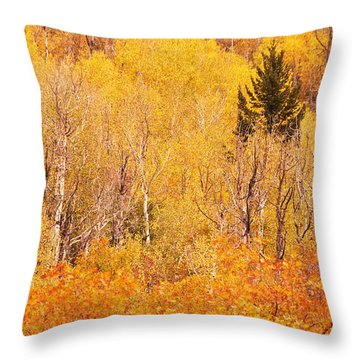 Eyeful Of Color Throw Pillow by Bob and Nancy Kendrick