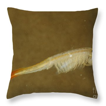 Fairy Shrimp Thamnocephalus Platyrus Throw Pillow