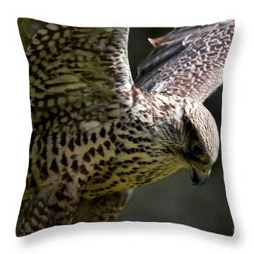 Falcon Taking Off Throw Pillow by Pravine Chester