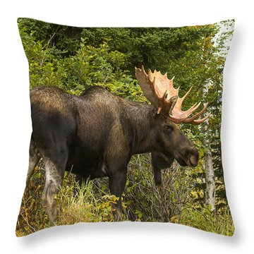 Throw Pillow featuring the photograph Fall Bull Moose by Doug Lloyd