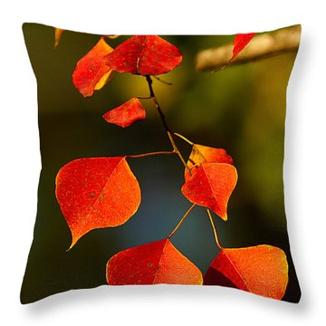 Throw Pillow featuring the photograph Fall Color 2 by Dan Wells