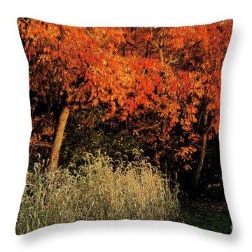 Fall Colors 2 Throw Pillow by Vilas Malankar