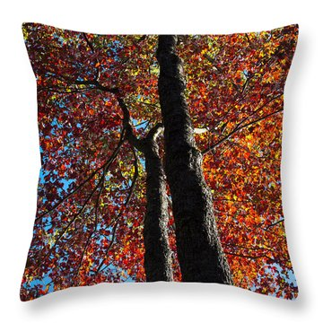 Fall From Above Throw Pillow by David Patterson