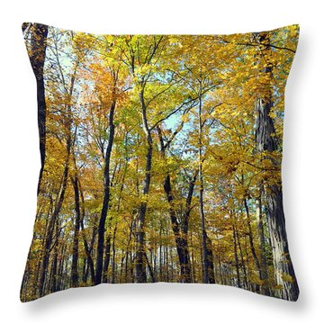 Fall In The Forest 2 Throw Pillow by Marty Koch