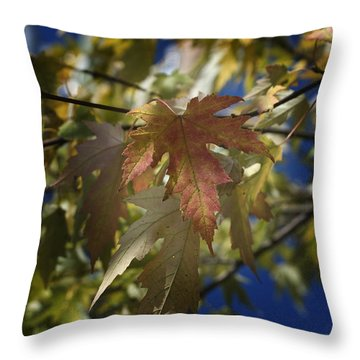 Fall Throw Pillow by Kelly Rader