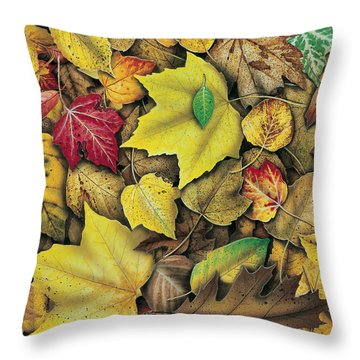 Fall Leaf Study Throw Pillow by JQ Licensing