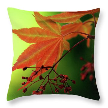 Fall Leaves Throw Pillow by Michelle Joseph-Long