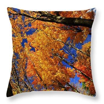Fall Maple Treetops Throw Pillow by Elena Elisseeva