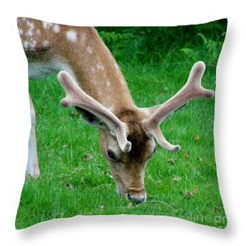 Fallow Deers Lunchtime Throw Pillow by Isabella F Abbie Shores FRSA